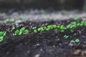 Growing Plants - Pexels.com
